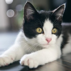 pet-friendly rental